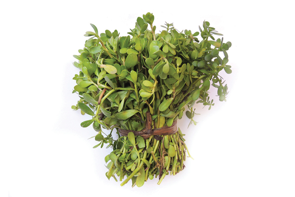 Ayurvedic Bacopa Motivation