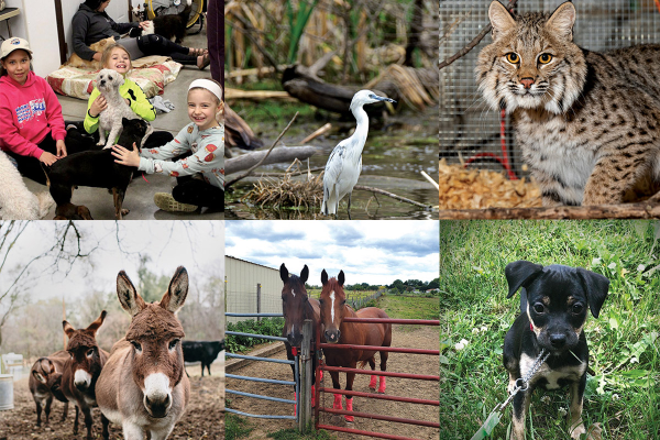 collage of animal pictures