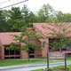 Bellingham Public Library Looks at June - May 29 2015 0600AM
