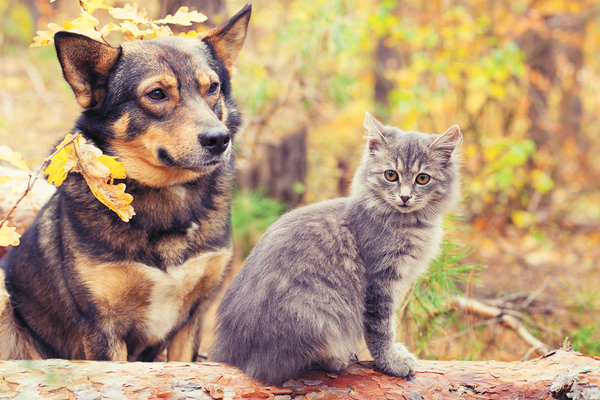 Dog and Cat with Fall Allergies Itch