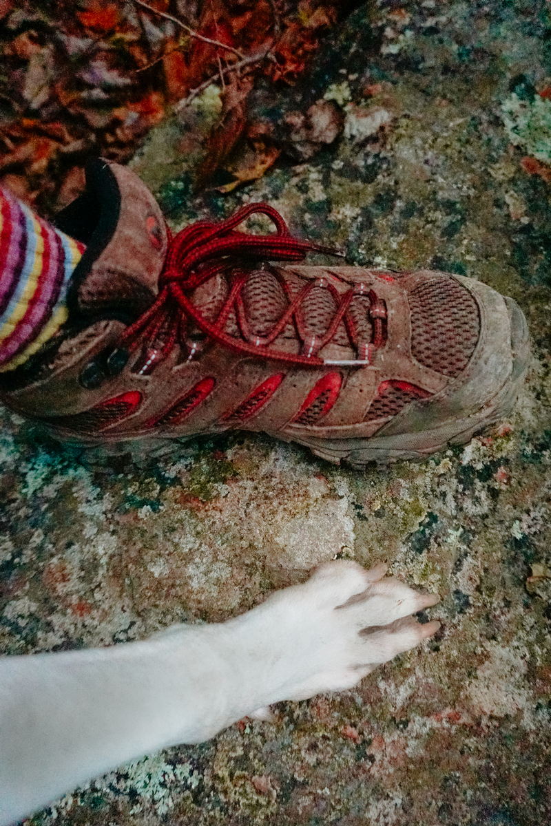 A humans foot with hiking boots on next to a dogs white paw