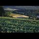 Wegmans and Spiral Path Farm Benefit Local Consumers